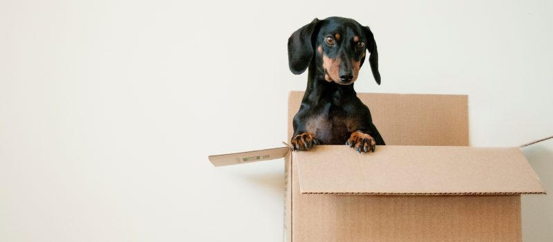 Green Moving Boxes in San Francisco: How to Achieve an Eco-Friendly Move